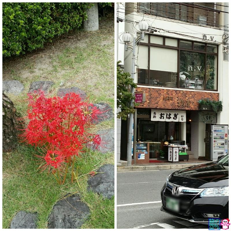 東本願寺前の彼岸花(と、おはぎの店)