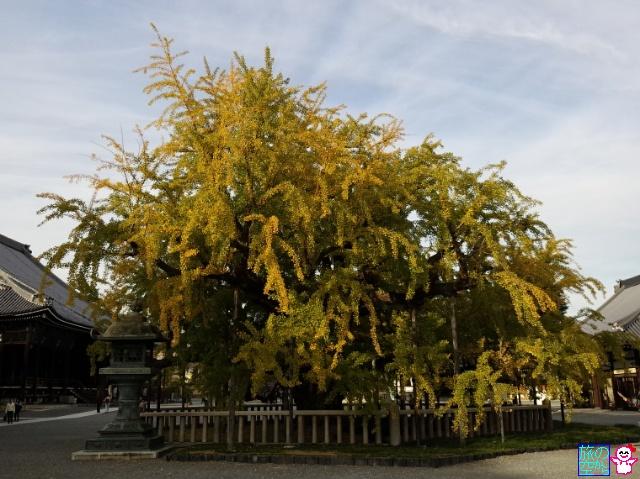 きょうの黄葉(西本願寺)