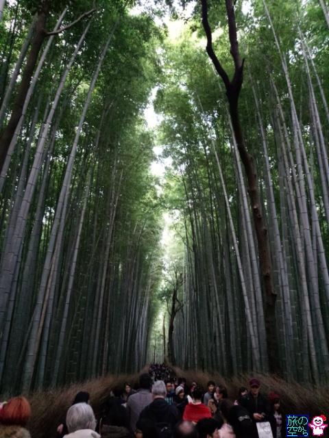 きょうの竹林(嵐山)