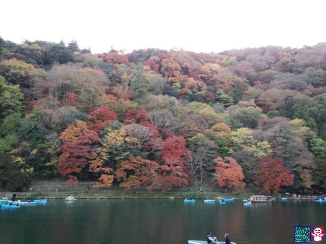 きょうの紅葉(嵐山)