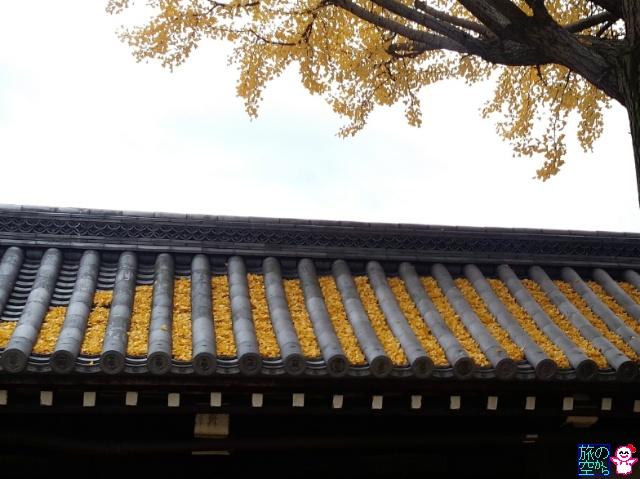 きょうの黄葉(東本願寺)