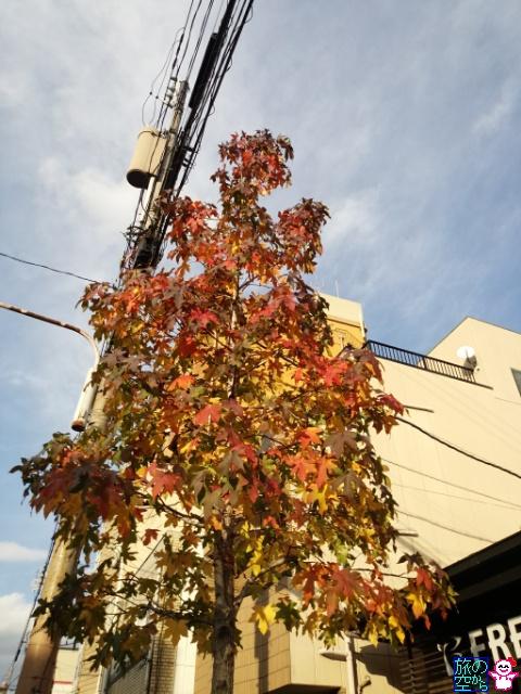 きょうの紅葉(千本中立売、京都御所)