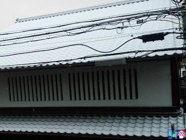きょうの雪(初雪っぽい)
