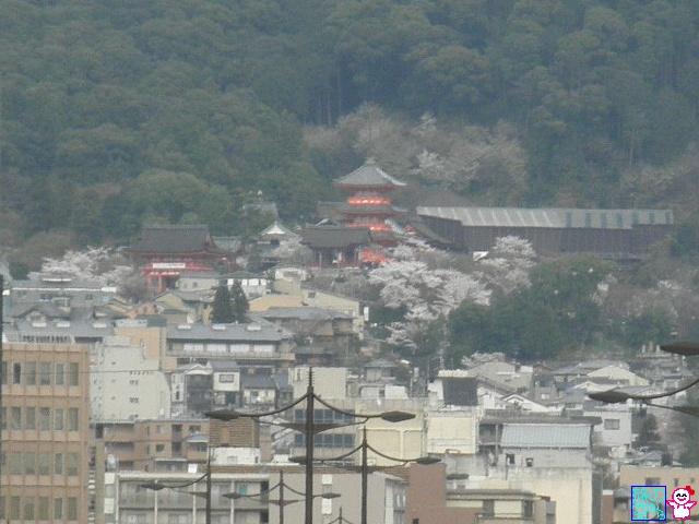 きょうの桜(清水寺遠景)