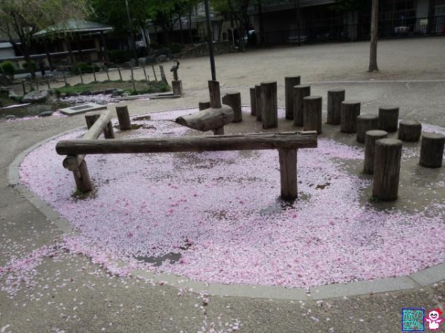 きょうの芝桜(修徳公園)