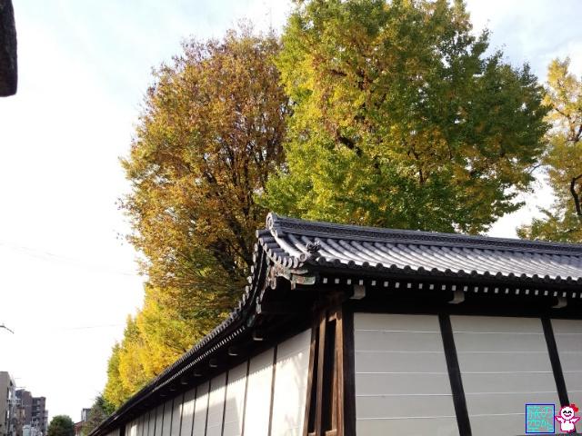 きょうの黄葉(東本願寺前)