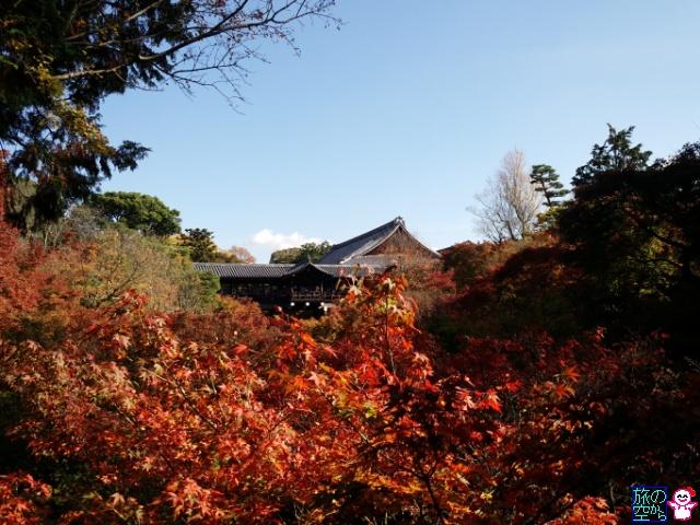 きょうの紅葉(東福寺)