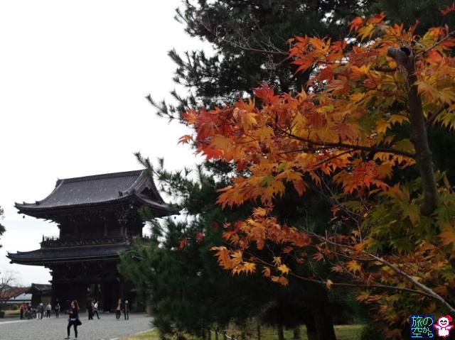 きょうの紅葉(嵯峨釈迦堂)