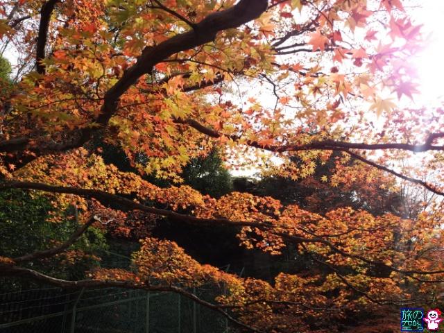 きょうの紅葉(北野天満宮)