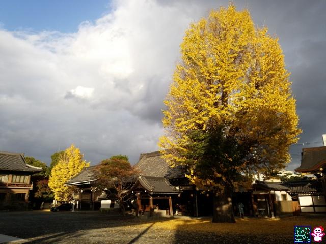 きょうの紅葉(仏光寺、修徳公園)