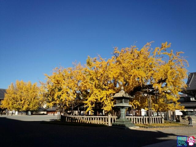きょうの黄葉(西本願寺その2)