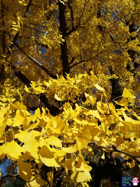 きょうの黄葉(西本願寺その1)