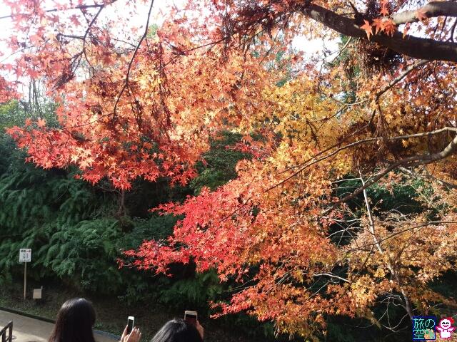 きょうの紅葉(清水寺)