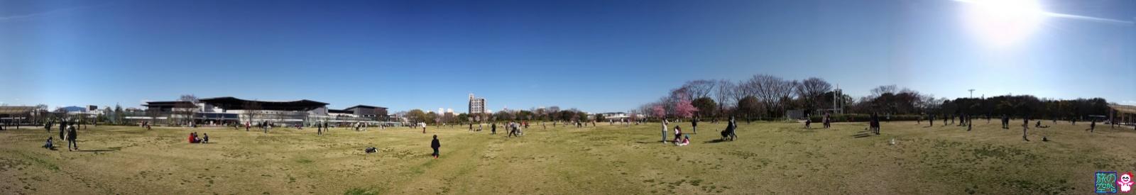 梅小路公園(サクラサク)