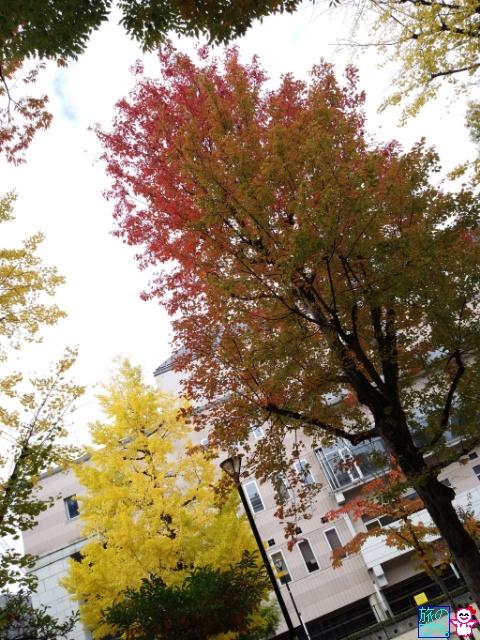 きょうの黄葉(東本願寺前、綾西公園、御射山公園、修徳公園)