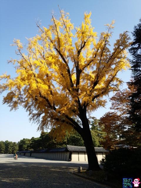 きょうの黄葉(京都御苑)
