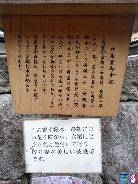 きょうの桜(六角堂)