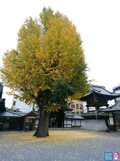 きょうの黄葉(仏光寺)