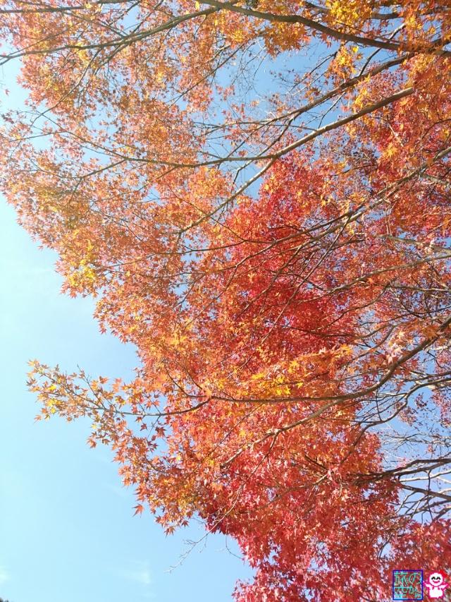 きょうの紅葉(嵐山界隈)