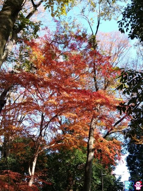 きょうの紅葉(糺の森)
