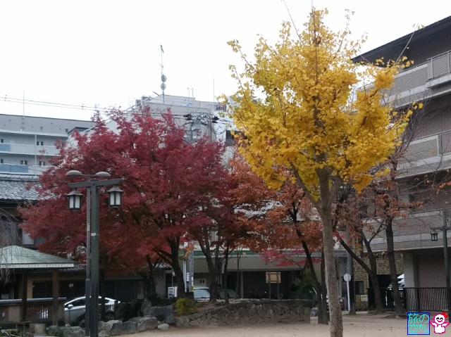 きょうの紅葉(修徳公園)。