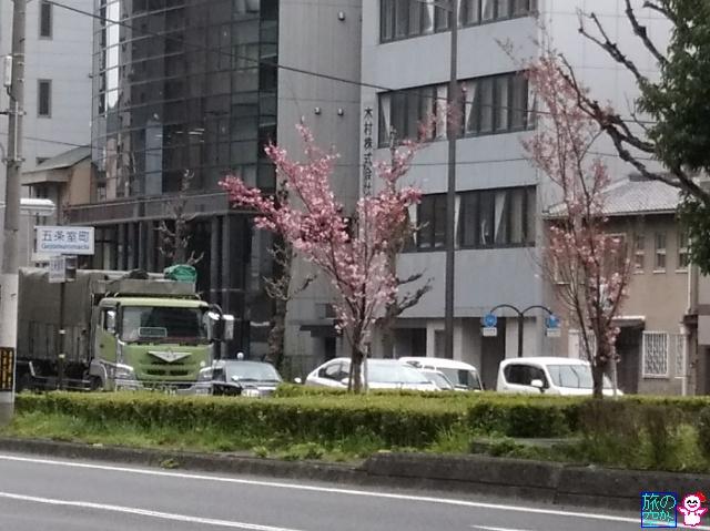 きょうの桜(修徳公園、五条室町)