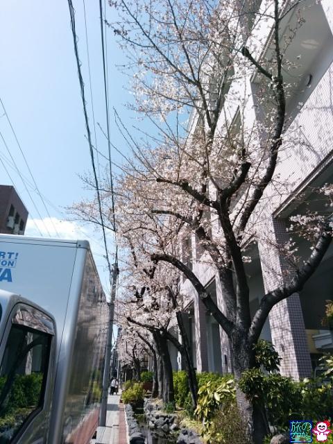 きょうの桜(洛央小学校)