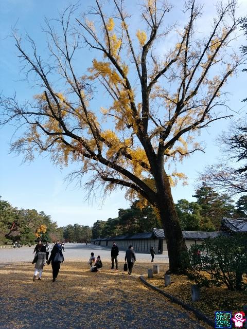 きょうの紅葉(京都御所)