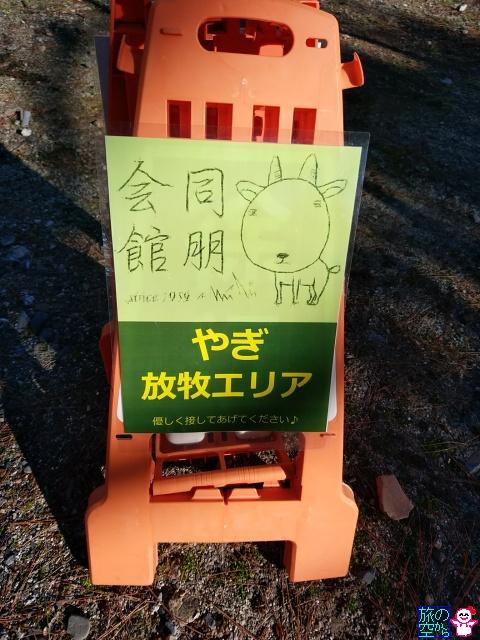 きょうの山羊(東本願寺)